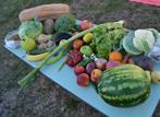 Празник на здравословното хранене в ЦДГ 2